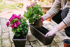 5. Decorați curtea cu plante perene
