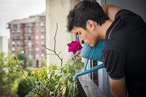 Imagine sfat: Reguli esențiale pentru îngrijirea florilor de apartament
