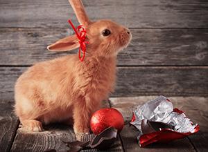 Imagine sfat: Ascunsul ouălor de Paște de către iepuraș