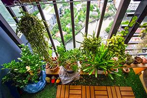 Imagine sfat: Care sunt cele mai bune flori pentru apartament?