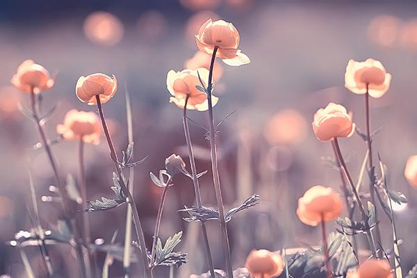 Imagine sfat: Urări de Florii