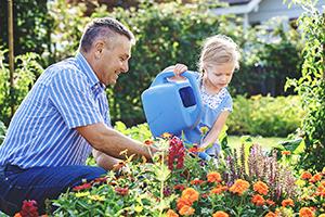 3. Udați corect plantele