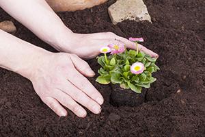 4.Protejați grădina de dăunători
