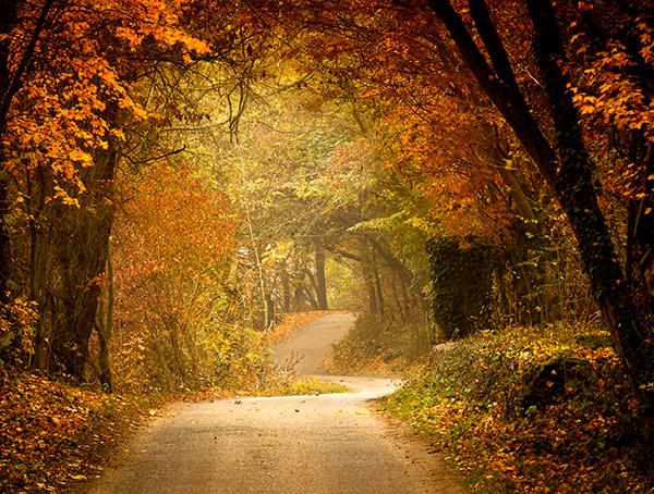 Imagine sfat: 2. O excursie ghidată în natură, pentru micul tău aventurier