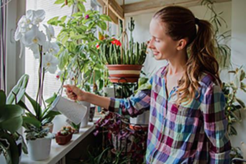 Thumbnail sfat: Îngrijire flori de apartament - care sunt cele mai bune flori de apartament ș...